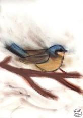 Oiseau de pastel 3