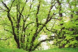Des arbres dans le parc