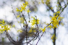 De jolies fleurs jaunes