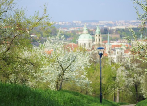 Le printemps au parc