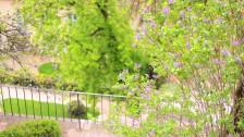 Fleurs dans le parc du château de Prague.