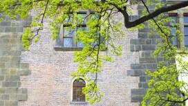 Un arbre verdoyant près du château de Prague