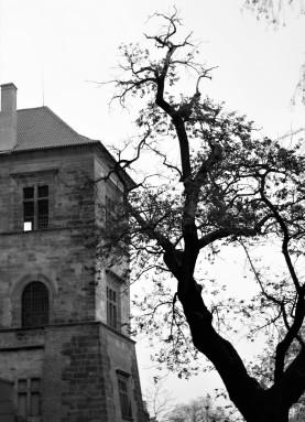 Un arbre et le château de Prague