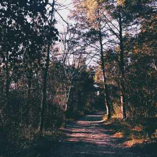 A Path In The Woods